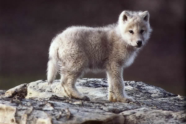 © National Wildlife Federation