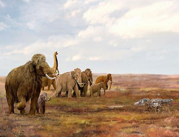 © The Field Museum