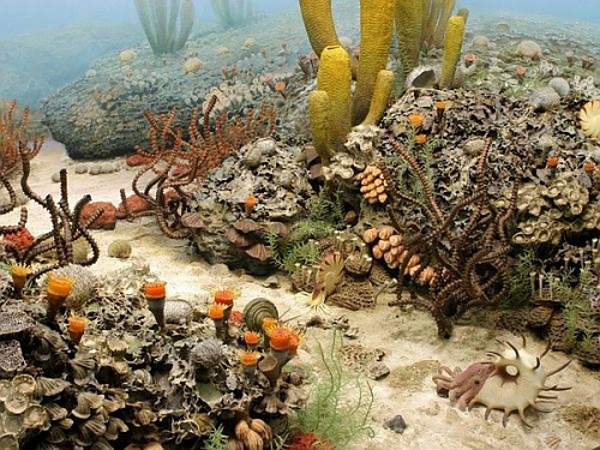 Реконструкция на морското дъно през пермския период.© University of Michigan Exhibit of Natural History