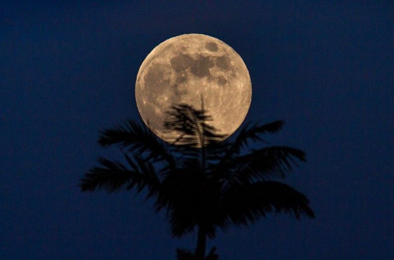Толкова ли е нужна мегалуна за оцеляването на тази палма?© Mike Neal/nealstudios.net