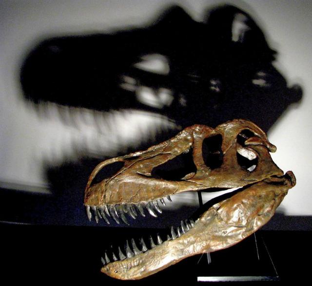 Представителят на вида Torvosaurus gurneyi е достигал дължина 10 метра и е тежал 4-5 тона.© Christophe Hendrickx/New University of Lisbon