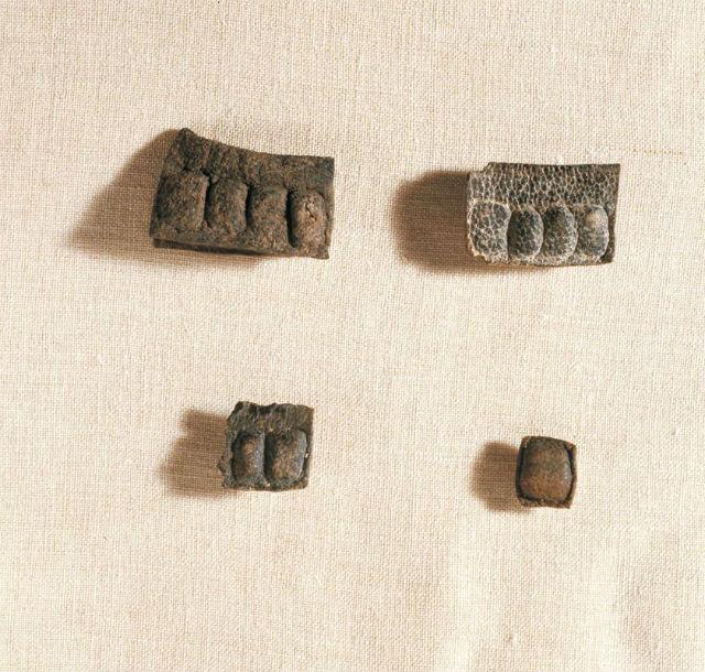 Неотворени тфилини от Кумран. © Clara Amit/Israel Antiquities Authority
