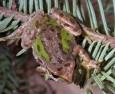 Как замразените жаби се връщат към живот