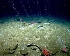 Метан извира от дъното на Атлантическия океан
