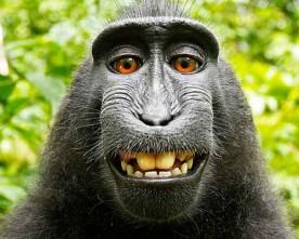 Маймуни, привидения и божествени същности – без авторски права