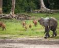 Животните изчезват от планетата