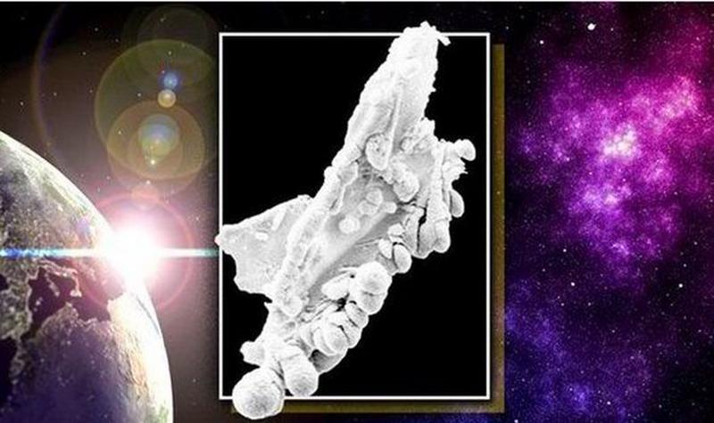 """Снимката на """"извънземното"""" в стратосферата, разбира се, не е фотошоп. Но колеги на специалистите от Шефилдския университет имат своя версия."""