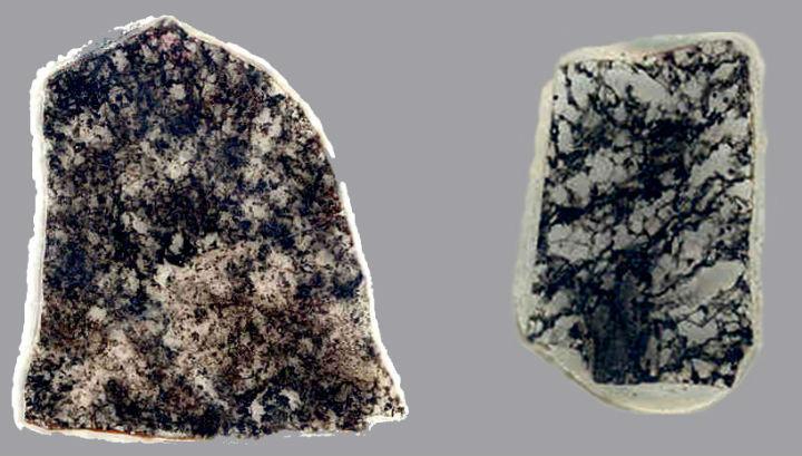 Срезове на породи, съдържащи фосилизирани серобактерии (тъмните участъци), на възраст 1,8 (вдясно) и 2,4 (вляво) млрд. години.© J. William Schopf/UCLA Center for the Study of Evolution and the Origin of Life
