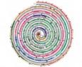 Ново дърво на живота разклаща теорията на Дарвин