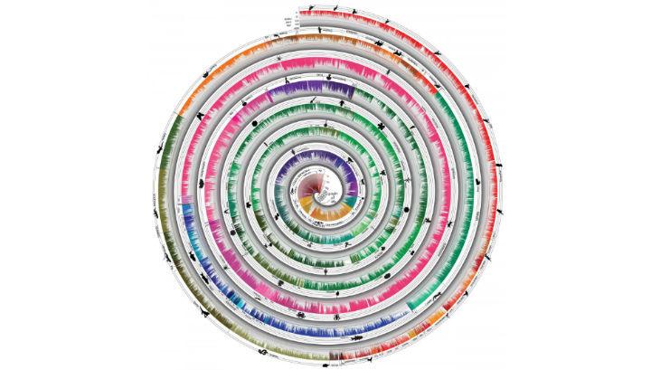 Дървото на живота с поправка на времето изглежда като спирала и обхваща еволюцията на около 50 000 вида.© Тemple University