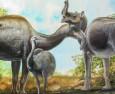 Разгадаха тайната на странните животни на Дарвин
