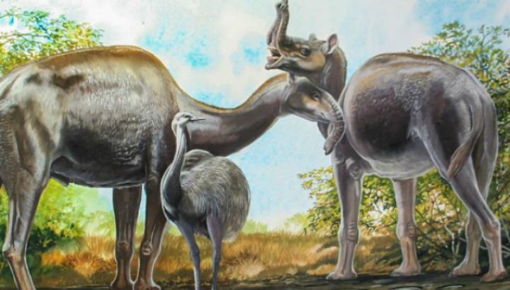 """Наполовина камили, наполовина слонове. Измрелите южноамерикански бозайници всъщност се явяват предци на конете.© Peter Schouten/""""Biggest, Fiercest, Strangest""""/W. Norton Publishers"""