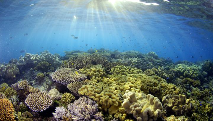 корали, коралов риф