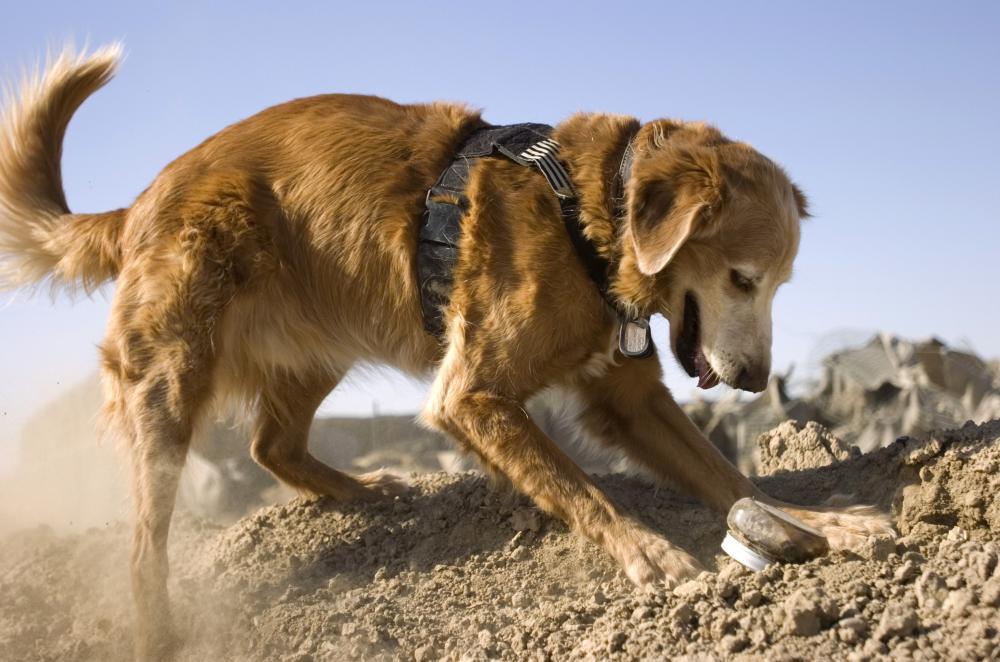 полецейско куче, следово куче