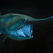 © Mark Conlin/SeaPics.com
