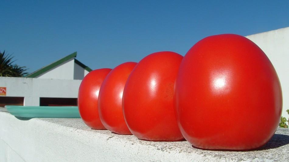 ГМО, домати гиганти