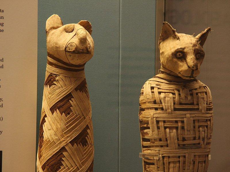животински мумии