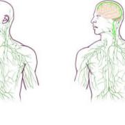Вляво – лимфната система, както я представят в учебниците. Вдясно – новите представи за нея. © Virginia Health System