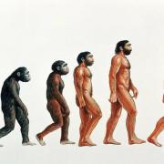 човешка еволюция,