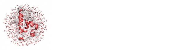 """""""Хидратиращата обвивка"""" на водните молекули може да се наглася изключотелно добре към структурата и движението на биомолекулите, които обгражда.  © Matthias Heyden, Max Planck Institut für Kohlenforschung, Mulheim"""