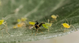 © Rothamsted Research