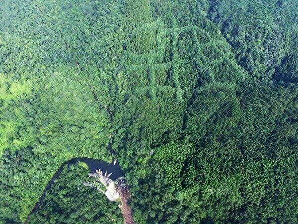 """От птичи поглет – трите символа, които е възможно да образуват китайския йероглиф, означаващ """"бягай бързо"""". Tencent.com"""