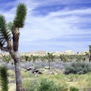 Сушата е един от главните стресови фактори за растенията. © Don Graham/flickr