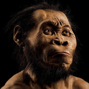 Homo naledi, древен прародител на човека