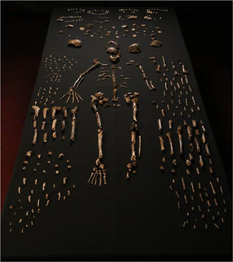 """""""Скелетът"""", разположен в центъра на снимката, е съставен от елементи от различни скелети. Масата, върху която са разположени костите, е широка 120 см. © eLife"""