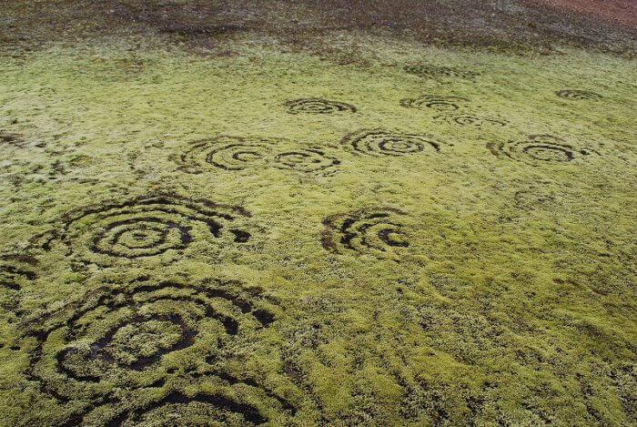 Вълшебни пръстени в мъх в Исландия. © Chmee2 / Valtameri