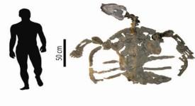 Скелетът на фосилизираната костенурка е дълъг почти 2 метра. © PaleoBios/Cadena