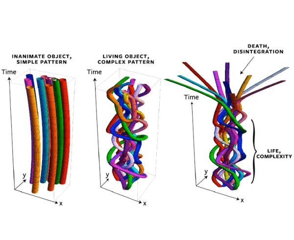 Отляво: неодушевен предмет, прост модел; в средата: живо същество, сложен модел; дясно: отплитане на плитката при смърт. Max Tegmark
