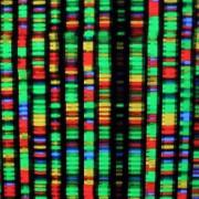 Дигитално изображение на човешкия геном. Всеки цвят представлява един от четирите химически компонента на ДНК. Independent