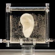 ухо от ДНК на Ван Гог