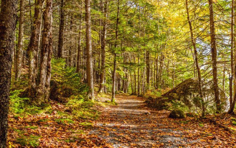 гора, есен