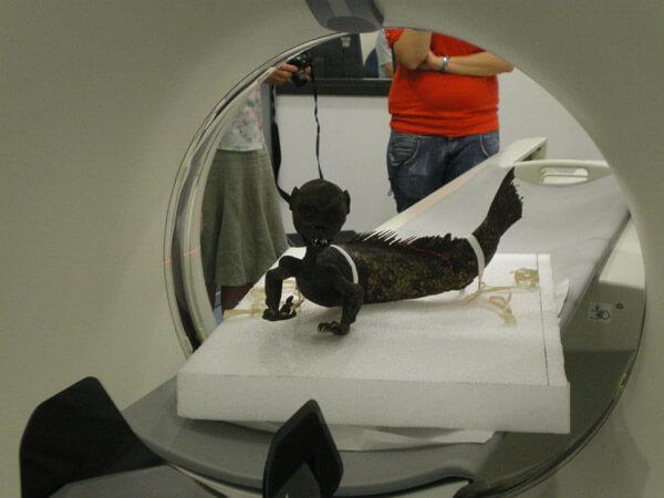 """Изследване на """"русалката"""" в компютърен томограф. © Horniman Museum & Gardens"""