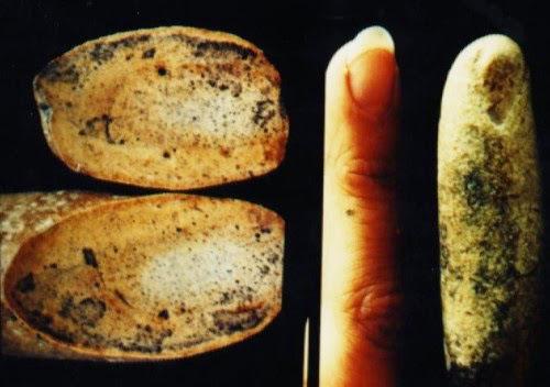 Фосилът действително прилича на човешки пръст.