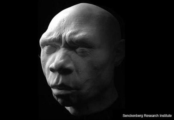 Реконструкция на Homo heidelbergensis. Senckenberg Research Institute.