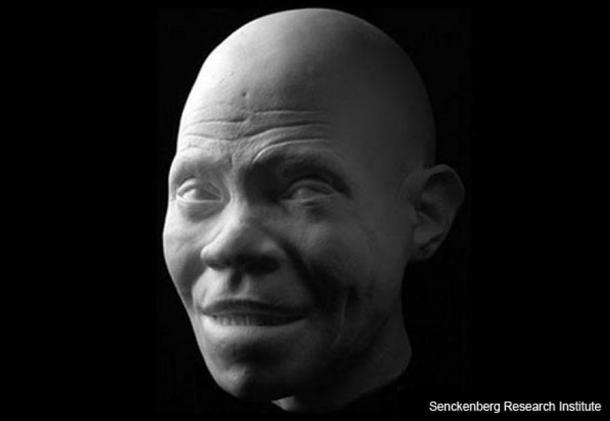Реконструкция на ранен представител на Homo sapiens. Senckenberg Research Institute