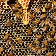 Хората са яли мед още преди 8 500 години