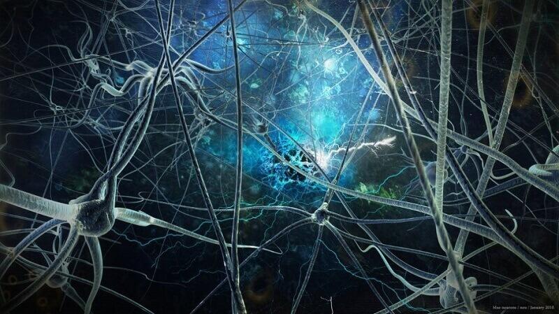 мозък, неврони