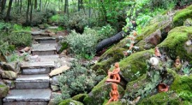 Даманхур, пеещи растения, гора