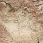 Изследователите смятат, че тиранозаврите са се движили с между 4.5 и 8 километра в час. Jessica Smith