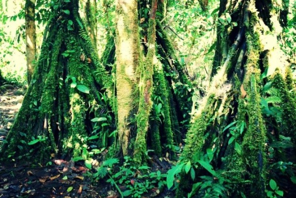 TW_Walking-Trees03_670