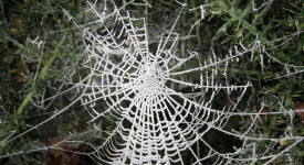 дрогираните паяци