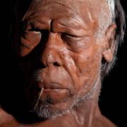 Модел на древен Homo Sapiens. © Trustees of the Natural History Museum, London 2014