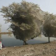 призрачни дървета Пакистан