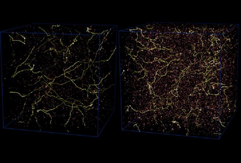Струните във Вселената на ранните етапи на нейното развитие. © B. Allen & E.P. Shellard