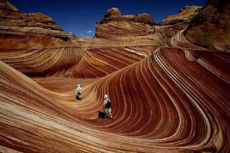 Койот Бътс, Аризона