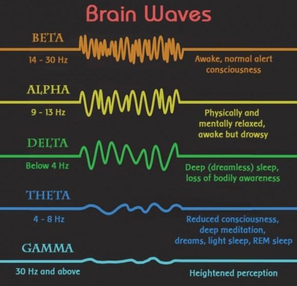 """Най-високочестотните са """"бета"""" вълните, а най-нискочестотните се наричат """"гама"""" вълни."""